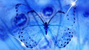 Motyl niebieski, niebieski motyl