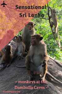 Sensational Sri Lanka ~ visiting monkeys at the Dambulla Temple Caves