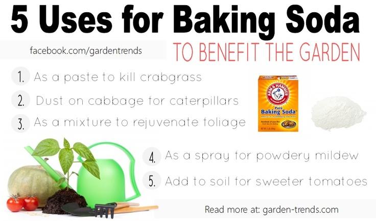 5 uses for baking soda in the garden baking soda soda bicarbonate is a safer inexpensive. Black Bedroom Furniture Sets. Home Design Ideas
