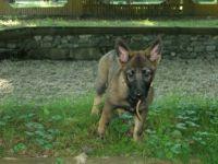 Bella... jedna štěněcí :-)