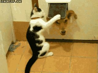And this jerk cat who won't let the dog in: | 20 Animals That Are Huge Jerks...This is HILARIOUS!