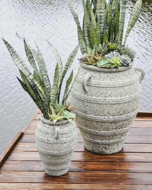 Just A Plant! Images On Pinterest | Snake Plant, Plants And Gardening