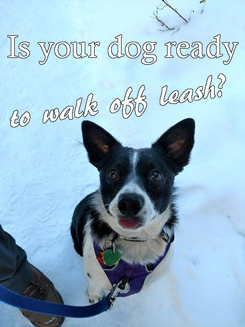 Not Every Dog Is Ready To Walk Or Hike Off Leash If They Re Not