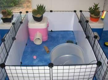 hedgehog cage idea: Use mini cooler as a house