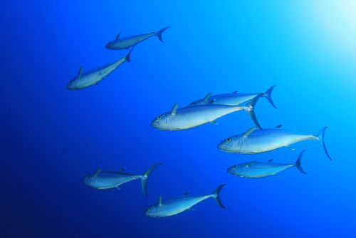 mercury levels in fish on the rise study finds fish