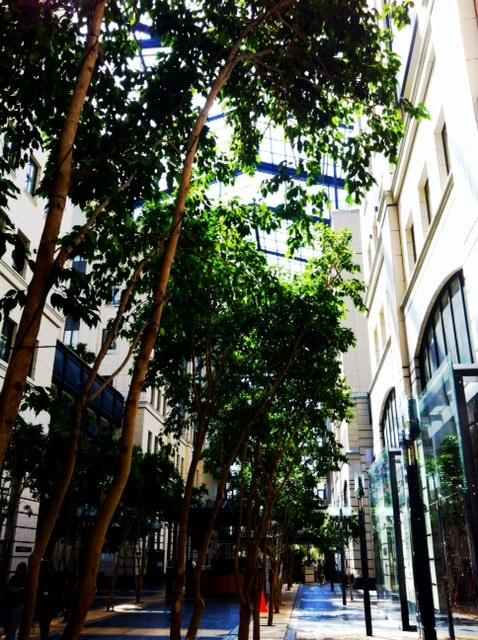 Trees, main foyer - Nedbank