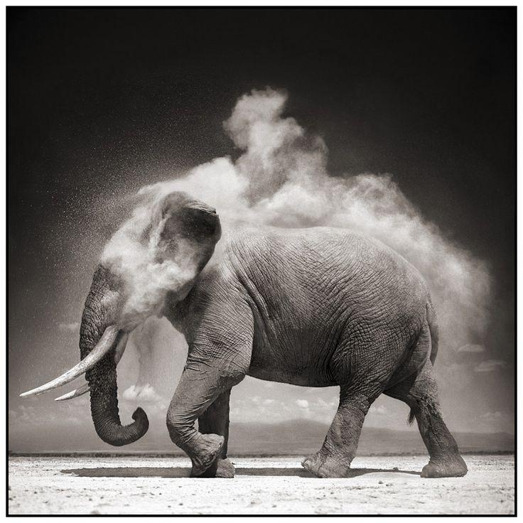 Brandt - the best wild life photos....