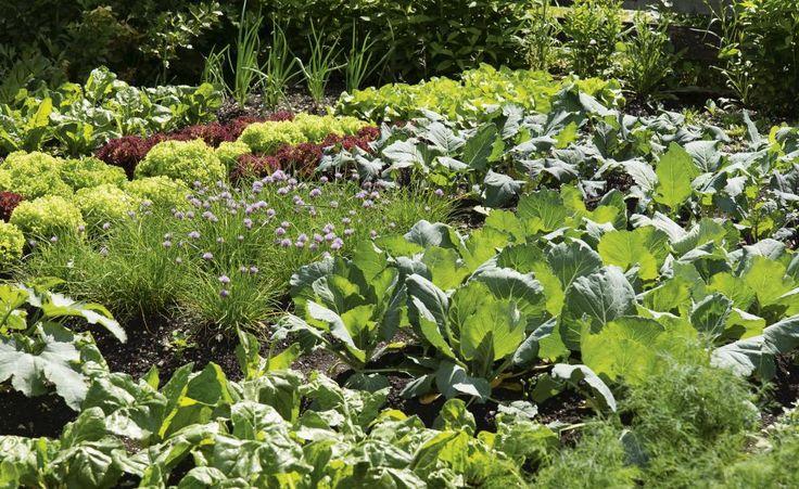 Das Gartenjahr: Anbau- und Erntekalender als Gratis-Download -  Wer sein eigenes Gemüse anbaut, hat von der Vorkultur über die Pflanzung bis zur Ernte das ganze Gartenjahr über etwas zu tun. Unser Anbau- und Erntekalender enthält Aussaat-, Pflanz- und Erntetermine für die wichtigsten Gemüsearten. Hier können Sie ihn als Gratis-PDF herunterladen.