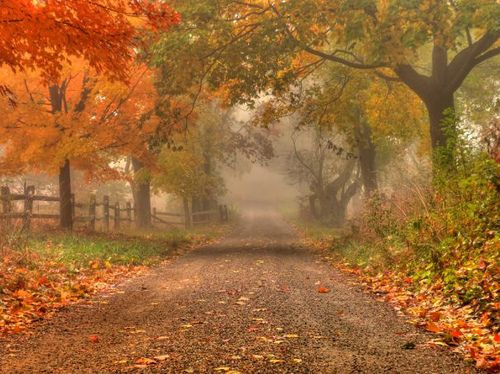 A Detailed Guide to Photographing Fall Foliage