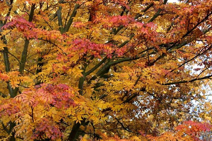 Sun hitting a tree in Greenwich Park