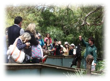 Bonorong Wildlife Sanctuary 30mins north of Hobart near Chocolate factory $58 Tour 11:00am & 2pm