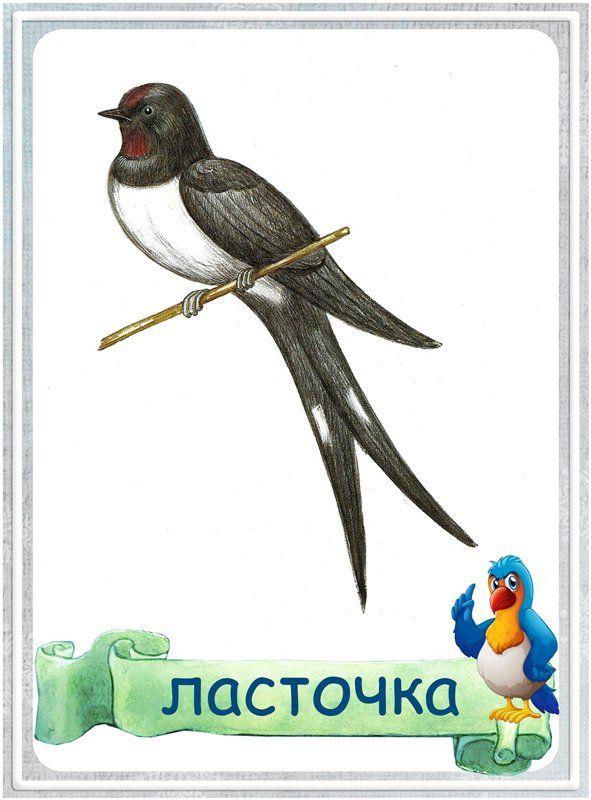 Картинки перелетных птиц для детей с названиями ласточка