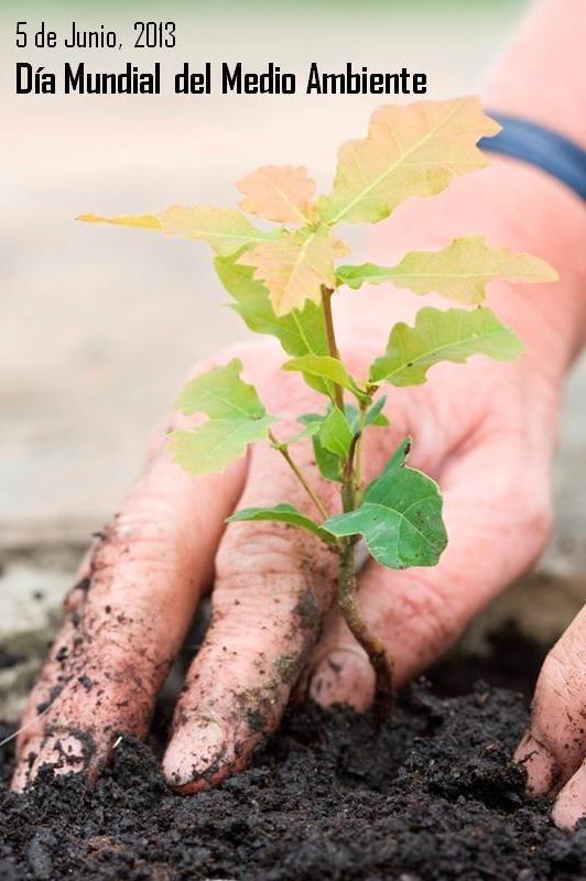 La tierra es nuestro refugio. Te invitamos a protegerla y cuidarla ya que ello depende el futuro de nuestras generaciones - Día Mundial del Medio Ambiente
