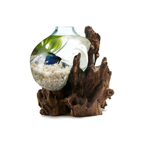 148 best images about aquarium apartments water friendly for Beta fish bowl