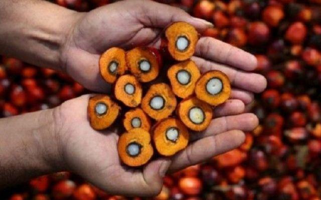 Segui i nostri consigli sull'olio di palma Che cosa fare con l'olio di palma? I rischi per il cuore e la circolazione ci sono eccome. L'Orga olio di palma oliodipalma salute