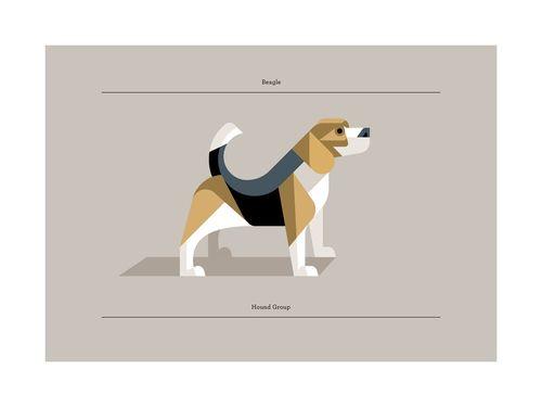 Josh Brill - Beagle