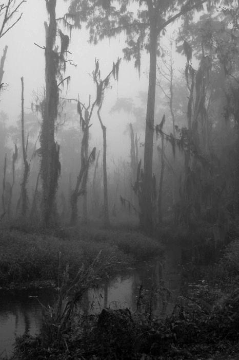Annika Radabaugh thinks this picture shows the setting of the marshes perfectly. Dickens describes the marshes as dark and gloomy, and this picture shows dark, mysterious, and gloomy marshes.