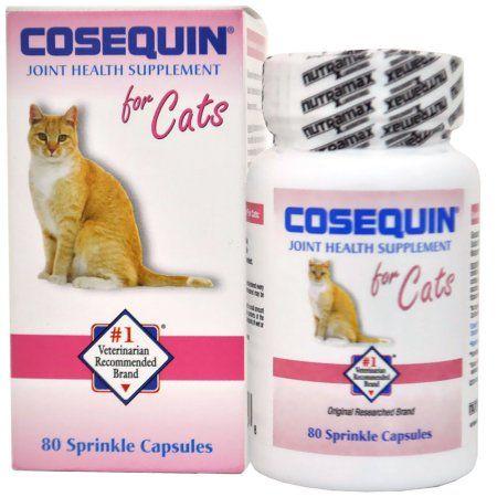 Seasonal Health Cat Health Health Care