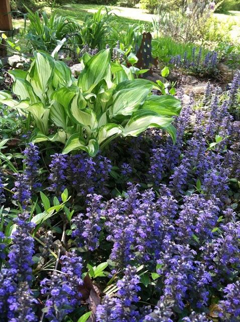 how to kill sweet clover perennials