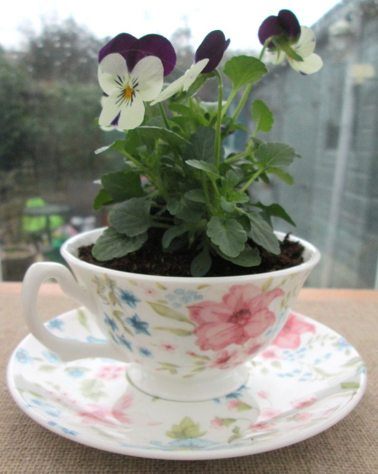 Tea cup planter ~ Whittards china upcycled recycled repurposed tea cup set ~ ceramic plant pot, unique gifts for Valentines or Mothers Day by BlueBoxStudio on Etsy