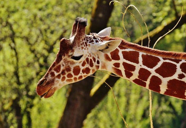 Mais de 50% dos animais escolhidos para representar os países correm o risco de desaparecer, concluiu um estudo da Universidade de Miami.