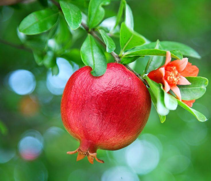 11 Alasan Mengonsumsi Buah Delima ~ Cara Sehat Alami