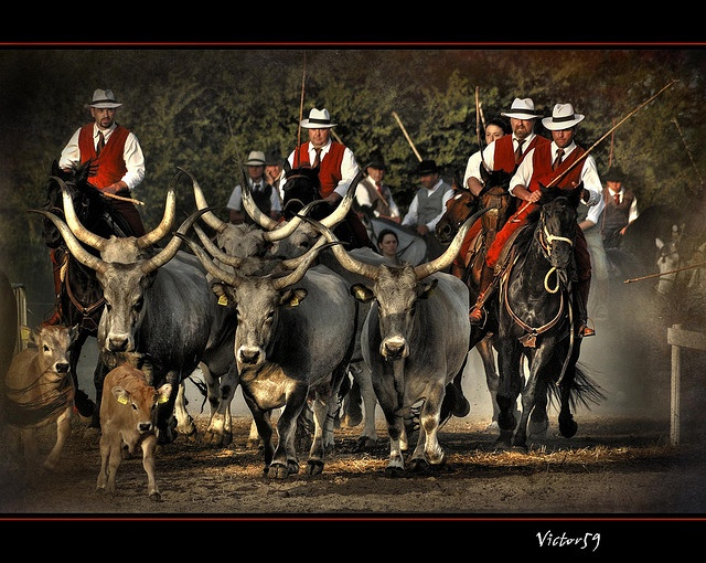 Maremma cowboys in action in Tuscany.