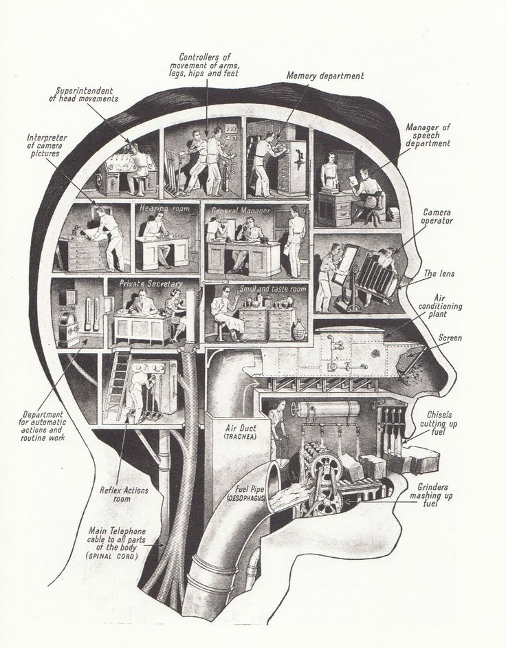 Another idea from Fritz Kahn.
