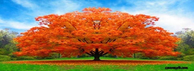 Autumn Beauty Facebook Covers, Autumn Beauty FB Covers, Autumn Beauty Facebook Timeline Covers, Autumn Beauty Facebook Cover Images
