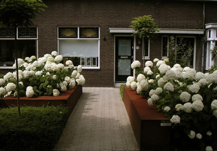 Voortuin met plantenbakken van cortenstaal, gevuld met bloeiende hortensia's.