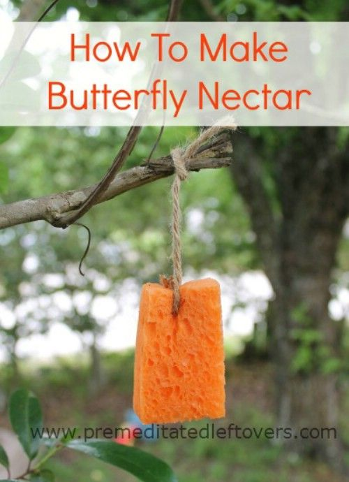 Lure in butterflies with this homemade nectar.