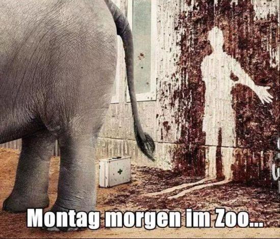 Montag morgen im Zoo