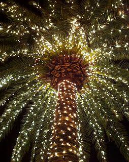 Palm tree Christmas :-)