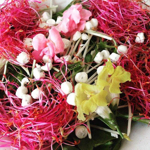 #lente#salade met #eetbare#bloemen#rosabi#sprouts#roze#bietenkiem#erwt-asperges#kiemen#spinazie#food #foodporn #foodinsta #foodinspiration#geitenkaas#ziegenmilch