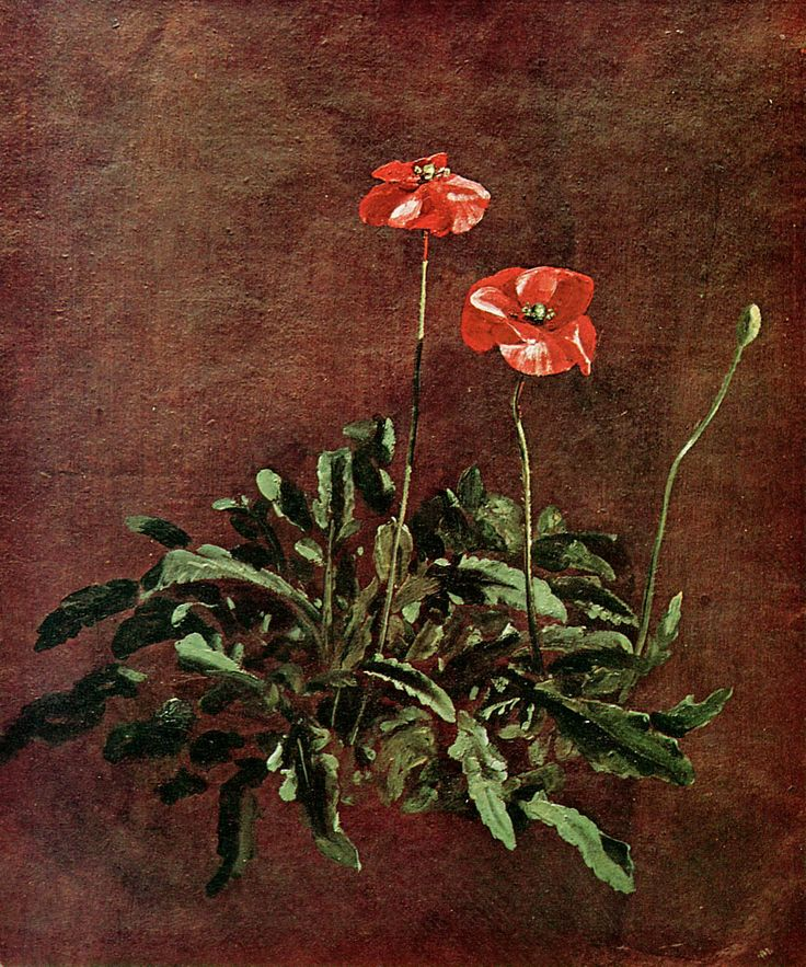 Study of poppies (John Constable)