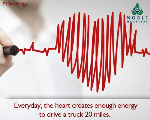 the heart does the most physical work than any muscle in the human, Muscles