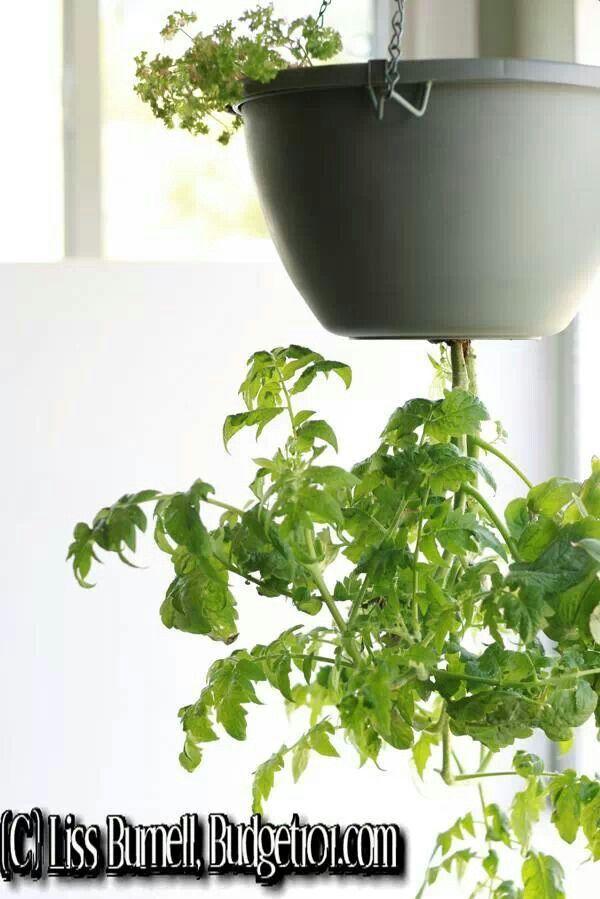 Diy Tomato Planter Gardening Pinterest 400 x 300