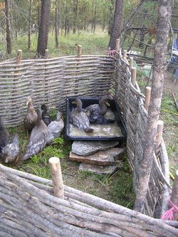 Making wattle fencing... Maybe around garden to keep chickens and goats out, or just for rustic décor! Love it!