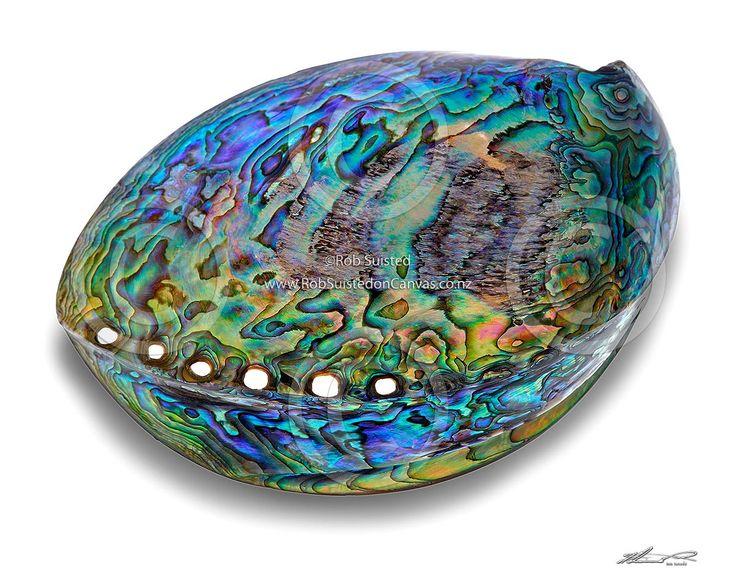 NZ's paua shell - beautiful colours