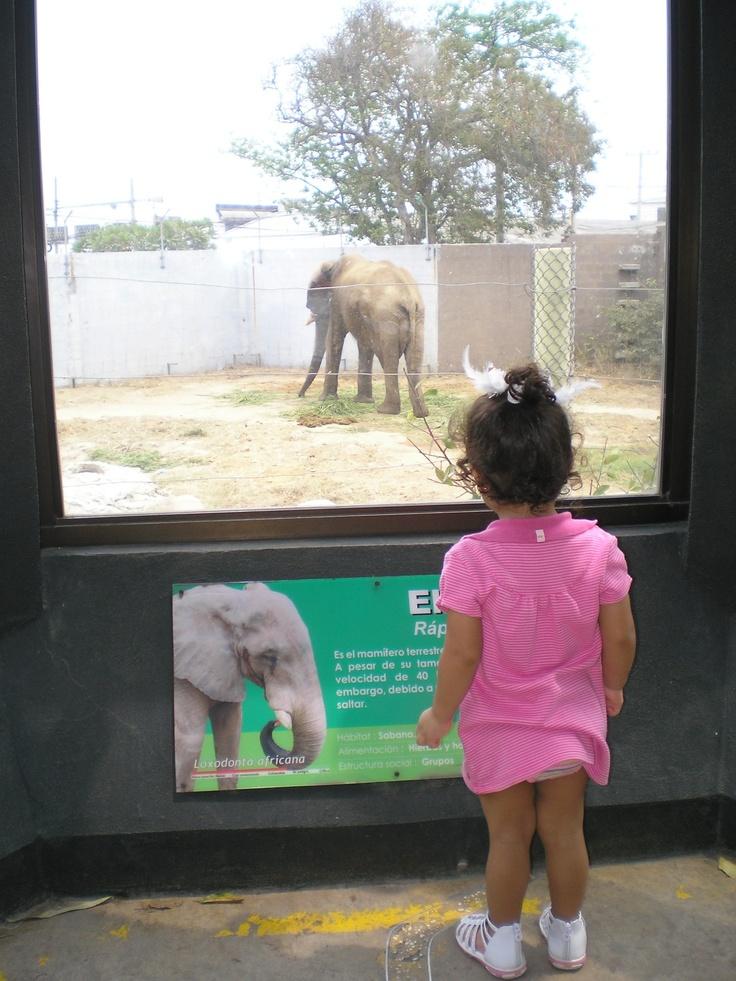 Aprendiendo en el Zoológico de Barranquilla.