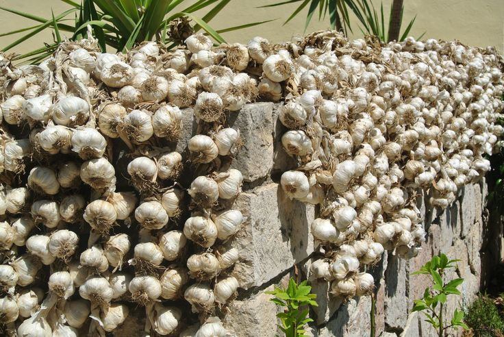 how to keep garlic from spoiling