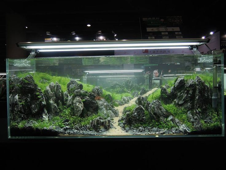 1000+ images about Aquascaping on Pinterest