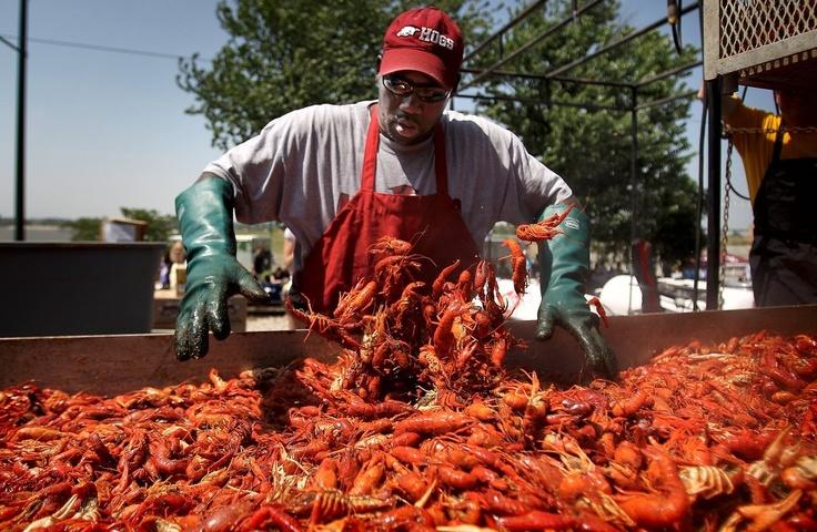 62 best Rajun Cajun Crawfish Festival images on Pinterest  Cajun crawfish Rajun cajun and
