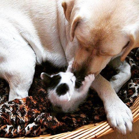 Neli daj buziaka!? #milosc #kotipiespodjednymdachem #jakkotzpsem #czulosci #wobjeciach