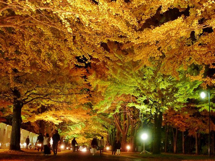 秋の彩りに魅せられて北海道の紅葉名所札幌札幌近郊編