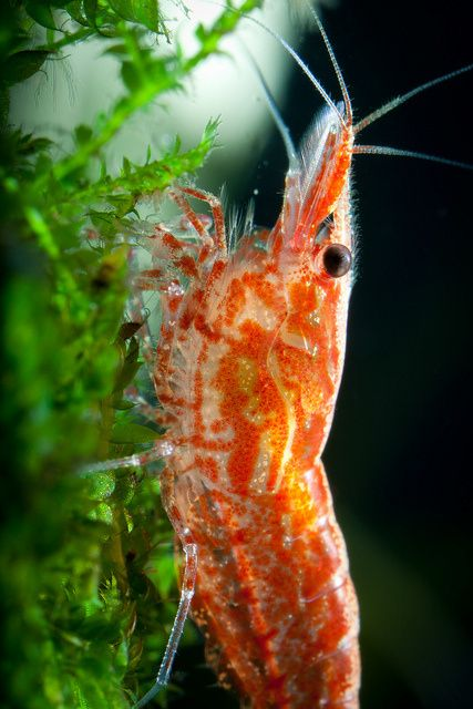 161 best fish tank images on pinterest aquarium ideas for Easy to care for fish