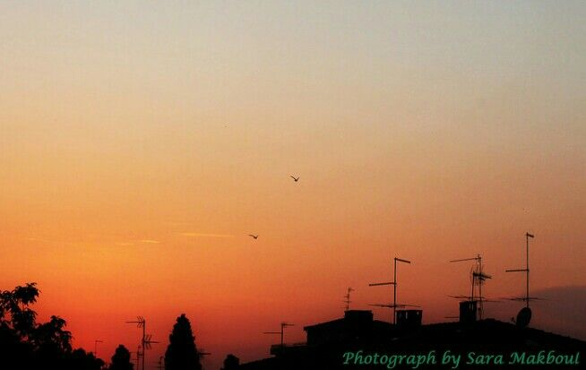 Swallows at sunset...