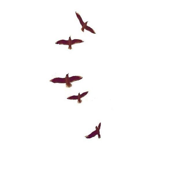 Transparent Tumblr Birds