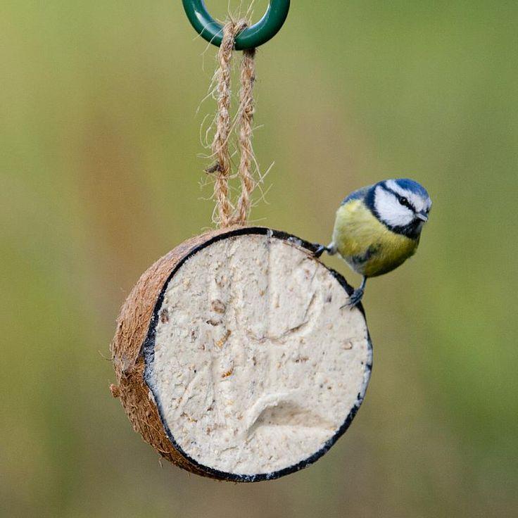 49 best cj wildlife images on pinterest gamebirds wild for Whole coconut bird feeders