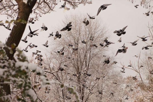 #Cismigiu #winter #tale #birds